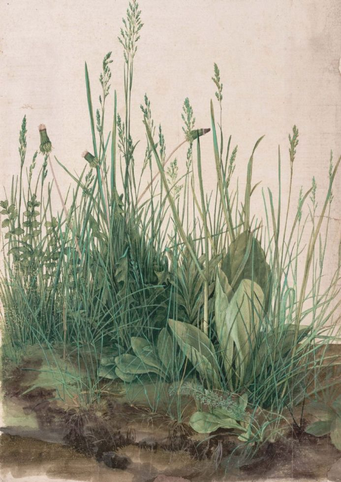 Durer, Albrecht: The Large Turf. (Realism) Botanical Fine Art Print.  (001912)
